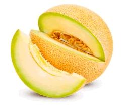 melon-galia-220