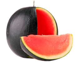 sandia-negra-sin-pepitas-220